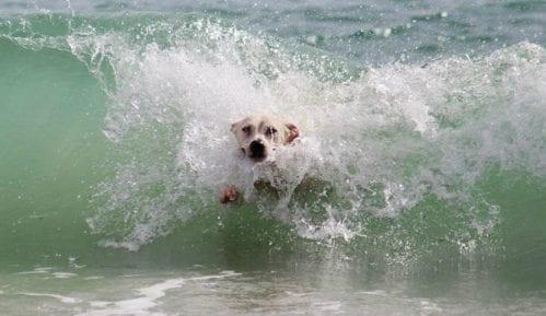 Kako brinuti o psu na plaži? 5