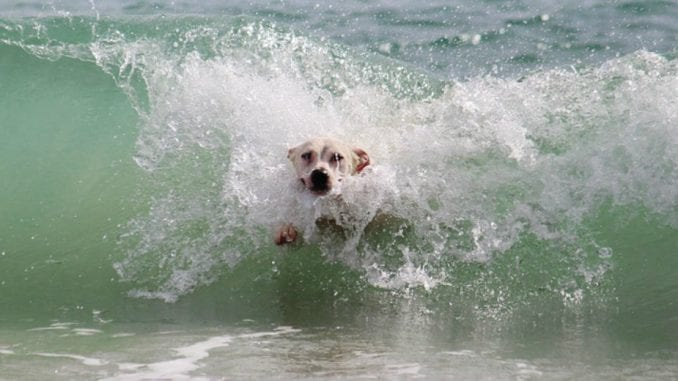 Kako brinuti o psu na plaži? 1