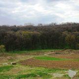 Počela akcija pošumljavanja Nacionalnog parka Fruška Gora 5