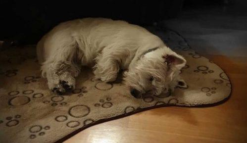 Kako psi reaguju na stres vlasnika? 12