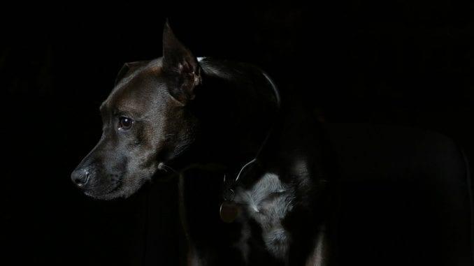 Da li ostaviti psa u mraku? 1