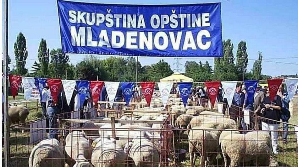 Kazna zbog objave slika ovaca na Fejsbuku 1
