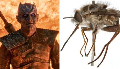 Igra prestola i Noćni kralj: Australijska muva dobila ime po liku iz HBO serije 9