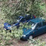 Oluja u Novom Sadu rušila stabla, bilo štete i na Egzitu (VIDEO) 10