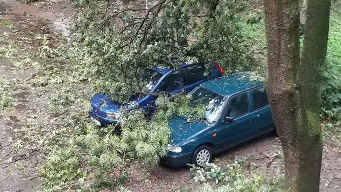 Oluja u Novom Sadu rušila stabla, bilo štete i na Egzitu (VIDEO) 1