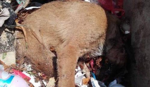"""Trovanje pasa u Priboju postalo """"tradicija"""" 4"""