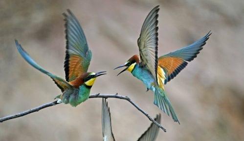 Zašto buka negativno utiče na ptice? 13