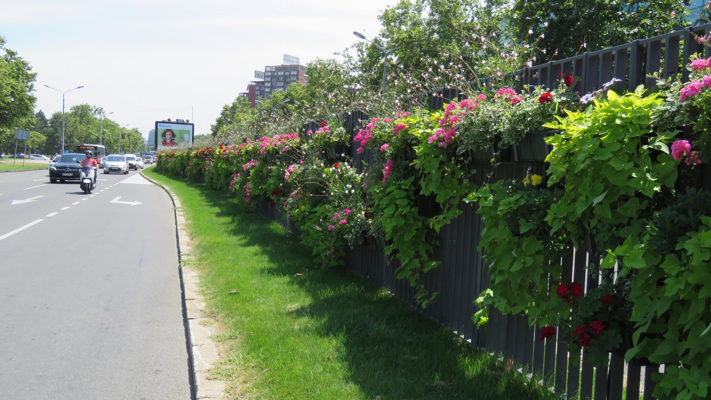 Cvetnjak na auto-putu u Beogradu (FOTO) 3