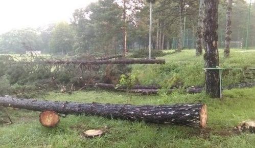 """""""Stop uništavanju Košutnjaka"""": Ne pristajemo na betoniranje šume 7"""