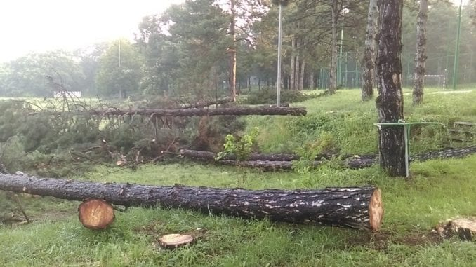 """""""Stop uništavanju Košutnjaka"""": Ne pristajemo na betoniranje šume 1"""