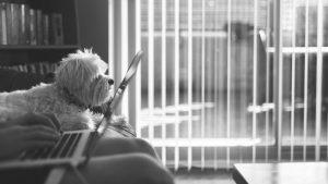 Kako prisustvo kućnog ljubimca na poslu utiče na zaposlene? 3