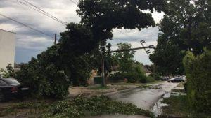 Oluja u Novom Sadu rušila stabla, bilo štete i na Egzitu (VIDEO) 2