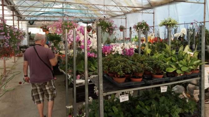 Segedin: Na festivalu cveća 1