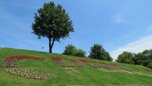 Cvetnjak na auto-putu u Beogradu (FOTO) 2