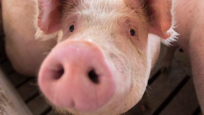 Skupština slobodne Srbije: Vlasti ne treba dozvoliti da od Vojvodine napravi svinjac 6