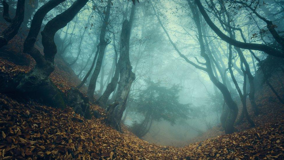 Misteriozna šuma u magli