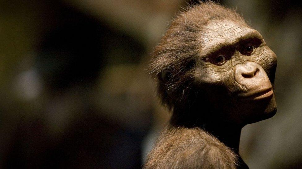Reprodukcija Lusi, ime koje se daje ženskom skeletu Australopithecus afarensis.