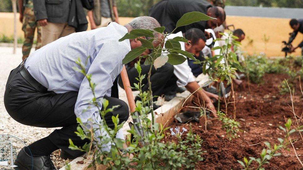 sadnja drveća u etiopiji
