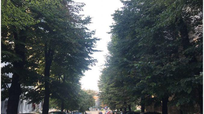 Sadnja drveća: Ne može bilo gde i bilo kad 3