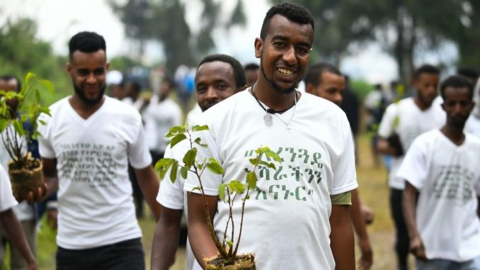 Pošumljavanje: Da li je Etiopija zasadila 350 miliona sadnica za jedan dan 2