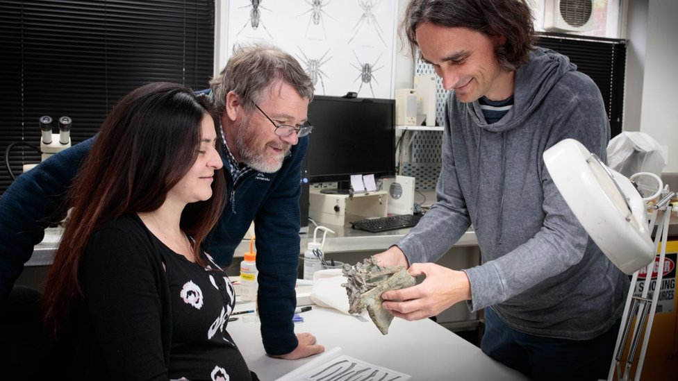 Researchers around a fossilised bone