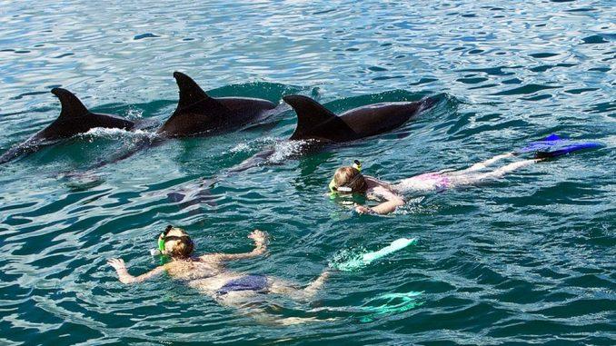 Novi Zeland: Zabranjeno plivanje sa delfinima 1