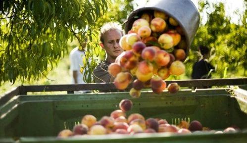 Rusi zabrinuti zbog voća iz Srbije 4