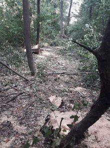 Rašumljavanje i seča stabala u Miljakovačkoj šumi 3