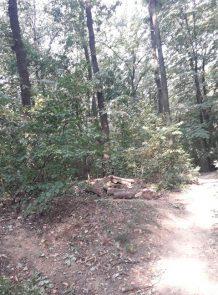 Rašumljavanje i seča stabala u Miljakovačkoj šumi 2