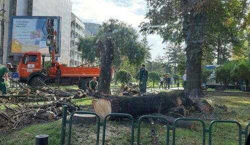 Zelenilo Beograd: Stabla u Čuburskom parku rizik za građane 7