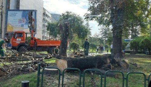 Zelenilo Beograd: Stabla u Čuburskom parku rizik za građane 3
