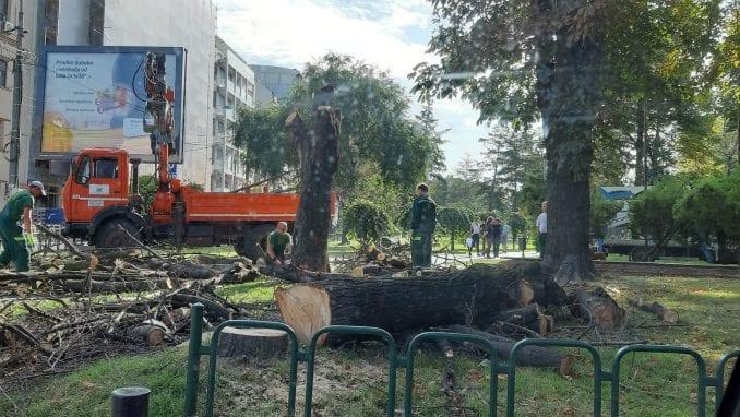 Zelenilo Beograd: Stabla u Čuburskom parku rizik za građane 1