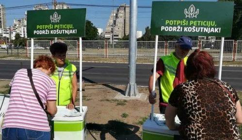 Zelena stranka skuplja potpise za sprečavanje seče drveća na Košutnjaku 2