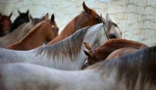 Galop u izbornoj trci: Veza čuvenih čistokrvnih konja i politike u Poljskoj 3