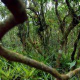 Kako su majušni majmuni oživeli peruanski Amazon 6