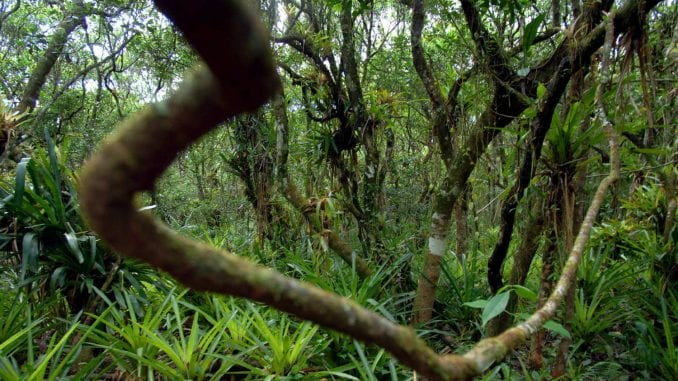 Kako su majušni majmuni oživeli peruanski Amazon 5