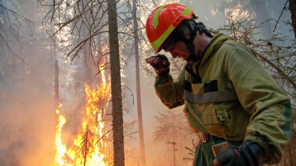 Da li zbog klimatskih promena ima više šumskih požara? 2