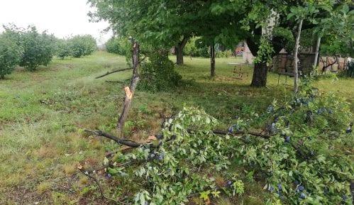 Jako nevreme oborilo drvo u Nišu, povređena jedna žena 3