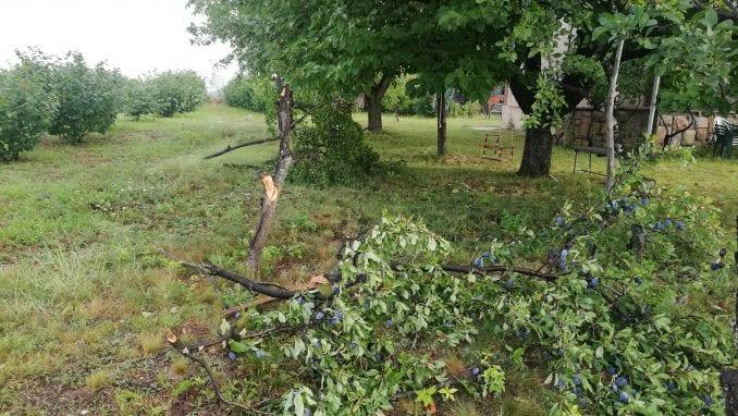 Jako nevreme oborilo drvo u Nišu, povređena jedna žena 1