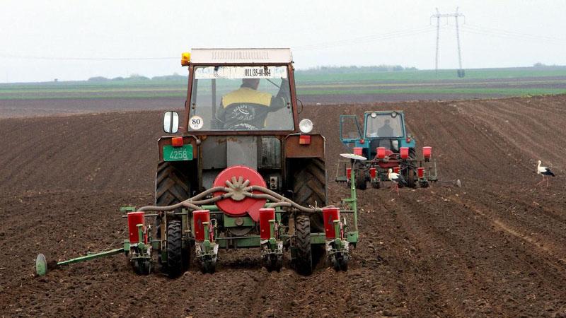 Pred setvu kukuruza država ukinula subvenciju za gorivo, skuplje seme, đubrivo i nafta 1