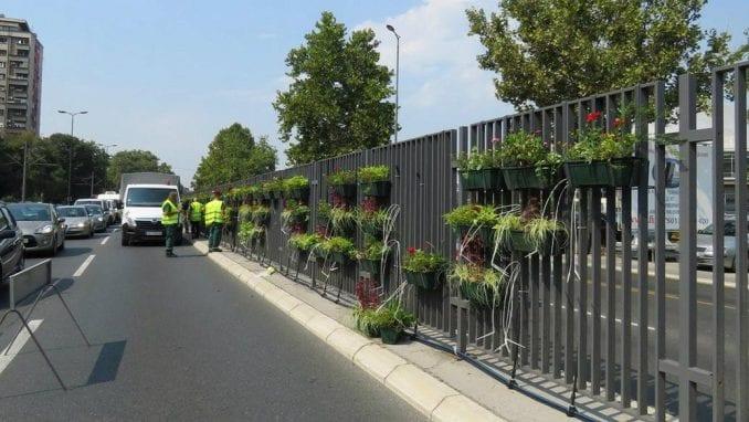 Cveće na razdelnoj ogradi beogradskog bulevara protiv buke i zagađenja 6