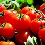 Protest proizvođača paradajza zbog niske cene sutra u Leskovcu 4