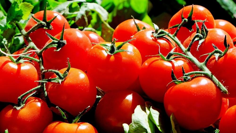 Protest proizvođača paradajza zbog niske cene sutra u Leskovcu 1