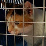 Od 1. januara psi i mačke iz Velike Britanije u EU uz sanitarnu potvrdu 4