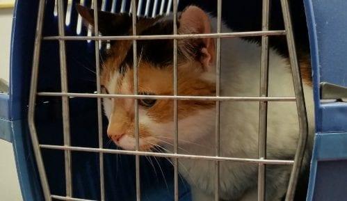 Od 1. januara psi i mačke iz Velike Britanije u EU uz sanitarnu potvrdu 9