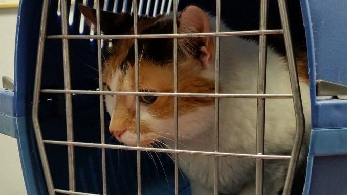 Od 1. januara psi i mačke iz Velike Britanije u EU uz sanitarnu potvrdu 2