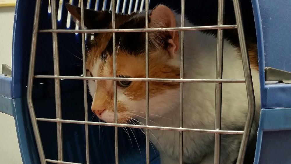 Od 1. januara psi i mačke iz Velike Britanije u EU uz sanitarnu potvrdu 1