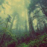 Sađenjem drveća nećemo zaustaviti klimatske promene 2