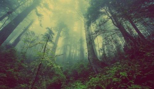 Sađenjem drveća nećemo zaustaviti klimatske promene 9