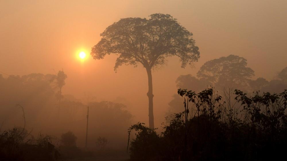 Zašto su požari u Amazoniji najvažniji događaj ovog leta? 1